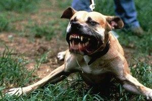 В США свора собак загрызла годовалого ребенка