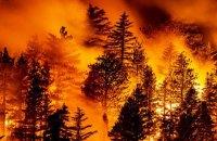 У Чорногорії спалахнула лісова пожежа