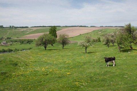 Британський вчений і мультимільйонер загинув у результаті нападу стада корів