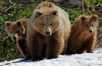 После сорок за Ким Чен Иром начали плакать медведи