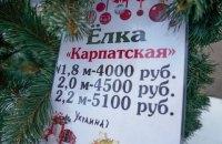 У центрі Сімферополя продають ялинки з Прикарпаття