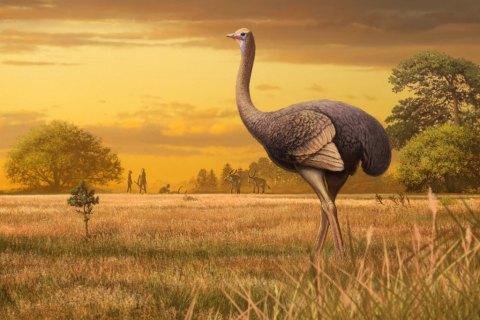 У Криму знайшли кістки гігантської викопної птиці вагою до 450 кг