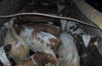 Пограничники задержали в Луганской области два грузовика с коровами
