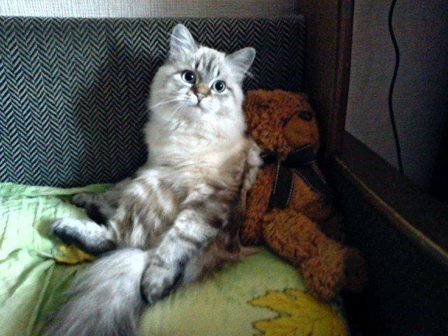 Кішка Марта від нашого постійного читача
