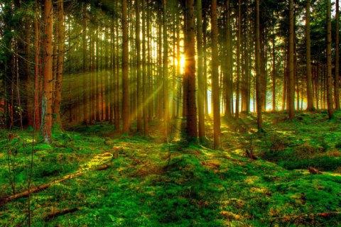 """США приєднаються до ініціативи """"Трильйон дерев"""""""