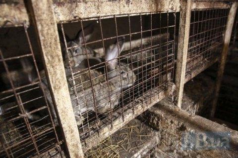 Мужчина получил три года тюрьмы за кражу кролика в Одесской области