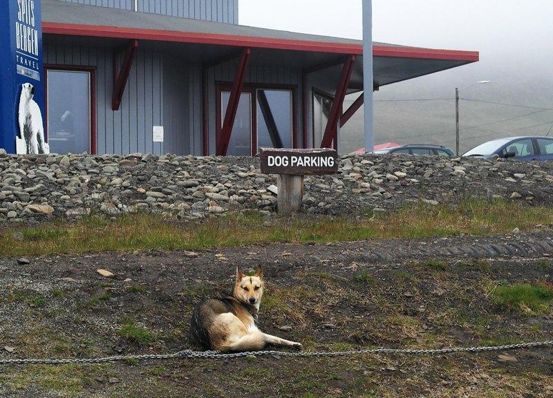 Собака дожидается хозяина при входе в отель Radisson в Лонгйире. Бар в отеле — одно из четырёх питейных заведений в городе.