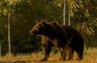 Активисты обвинили принца Лихтенштейна в убийстве самого крупного медведя Европы