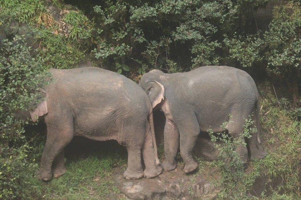 5 слонов погибли вТаиланде при попытке спасти тонувшего сородича