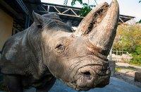 У Київському зоопарку помер носоріг