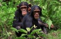 В Індії зграя мавп викрала зразки крові хворих на COVID-19