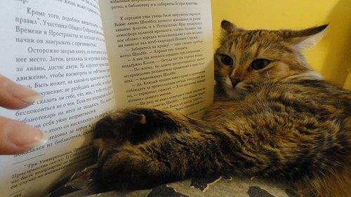 Алекстраза двумя лапами помогает хозяйке Виктории с чтением