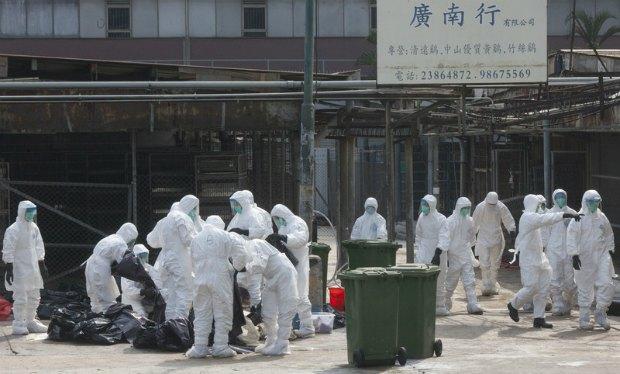 забой зараженных птиц в Китае