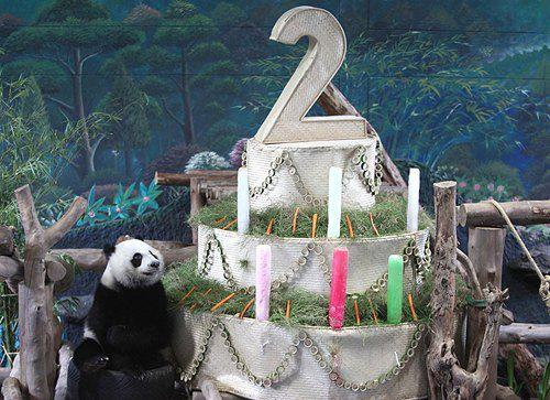 Малюк панди Лін Пінг святкує свої два рочки в тайську зоопарку Чіанг Май. 27 травня 2011 г.