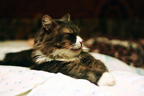 Фото кішечки від Олени Матковської