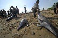 Около 90 дельфинов выбросились на берег недалеко от Австралии