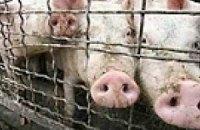 Украина запретила ввоз свинины из Литвы и Дании