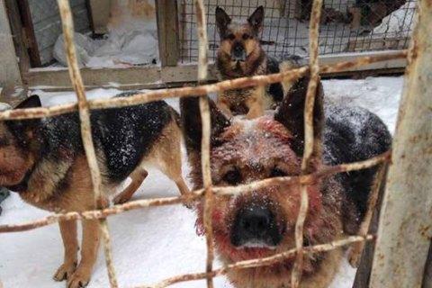 Під Києвом собаки загризли учасника АТО