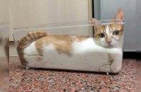 Шнобелевскую премию присудили за исследование жидкой природы котов