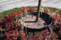 В Киеве выкопали деревья, посаженные к Дню крещения Руси