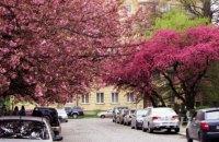 Закарпатська ОДА попросила призначити додатковий поїзд на час цвітіння сакури