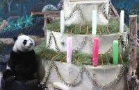 П'ятнична панда #100