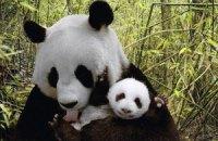 Пятничная панда #148