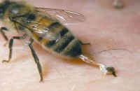 Мужчина умер после укуса пчелы в Харьковской области