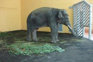 Київський зоопарк може поповнитися трьома слонихами
