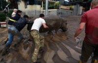 Тбіліський зоопарк припинив пошук звірів, які втекли через повінь