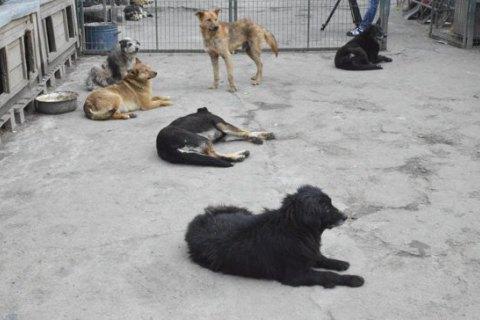У Києві під час локдауну тварин із притулку безкоштовно привозитимуть додому новим господарям