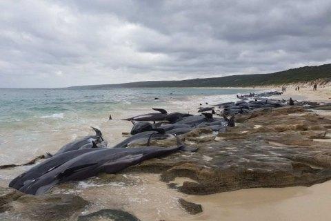 150 китів викинулися на берег в Австралії