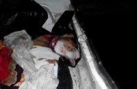В Винницкой области поймали серийных воров, специализировавшихся на коровах