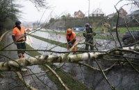 П'ять потягів затримувалися через падіння дерев на коліях у Львівській області (оновлено)