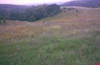 На Закарпатті продали землю АТОшників, визнавши дерева на ній нерухомістю (оновлено)