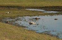 На Херсонщині судитимуть агронома, через якого загинули 218 червонокнижних журавлів