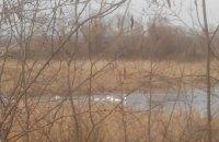 В Херсонской области спасатели помогли стае лебедей выбраться из ледяного плена