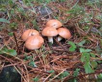 Вспышку отравлений грибами медики ожидают после 10 октября