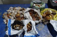 Украинец незаконно пытался ввезти в Польшу 25 кг янтаря