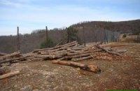 На мисі Айя вирубали 10 га лісу і встановили паркан
