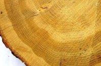 Деревні кільця розповіли вченим про клімат Римської імперії