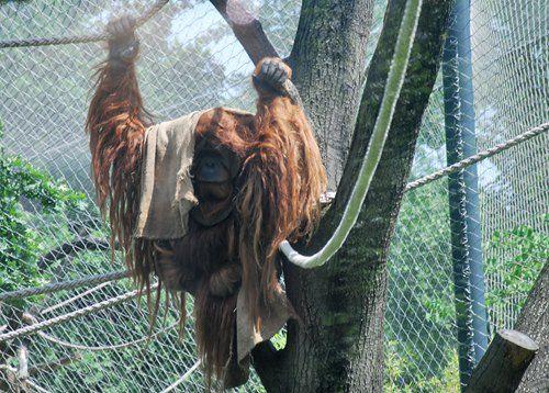 На цих двох фото - теж мешканці Берлінського Зоо від Ірини