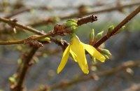 В Киеве 2 апреля потеплеет до +12, без осадков