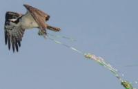 Супрун призвала выпускников отказаться от традиции запускать воздушные шары