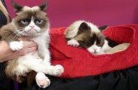 Умерла кошка Grumpy Cat