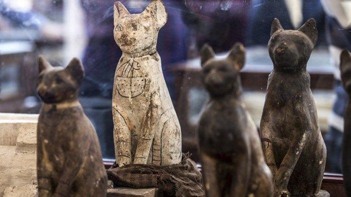 Експозиція муміфікованих кішок, знайдених в давньоєгипетському некрополі, була представлена публіці в Каїрі, 23 листопада 2019.