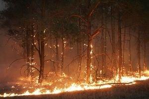 У Криму від пожежі постраждали 6 га лісу