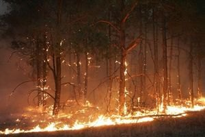 На Житомирщині оголосили високу пожежну небезпеку