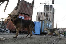 Украинцы не готовы приютить бездомных животных - опрос