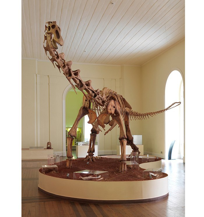 Скелет титанозавра, ок.99-65 млн. лет.